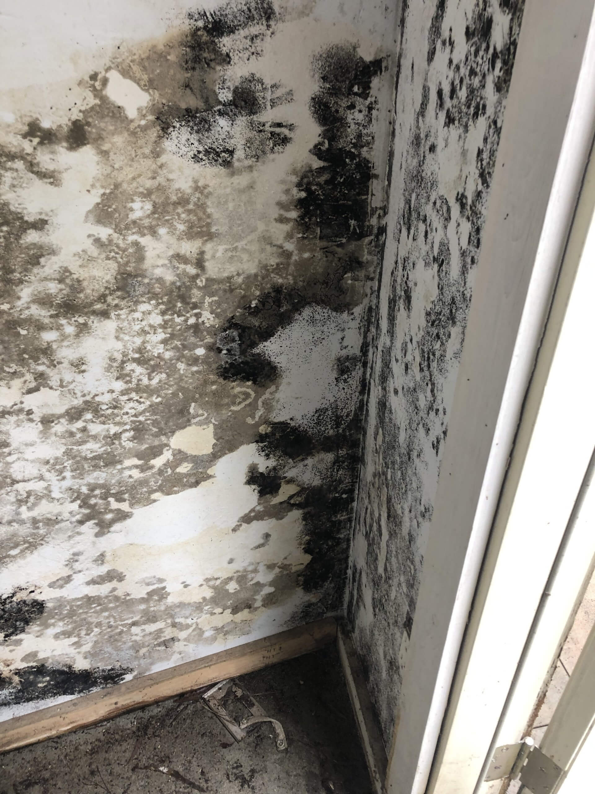 How To Get Rid Of Mold On Cabinets Wood Youtube